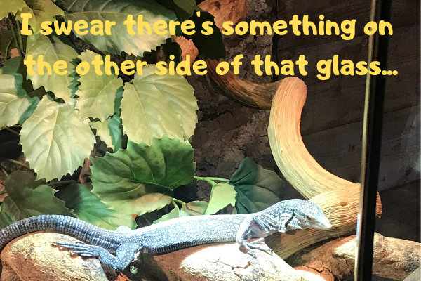Image of an ackie monitor seeing something on the other side of the glass