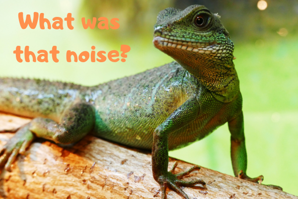 Chinese water dragon asking what that noise was