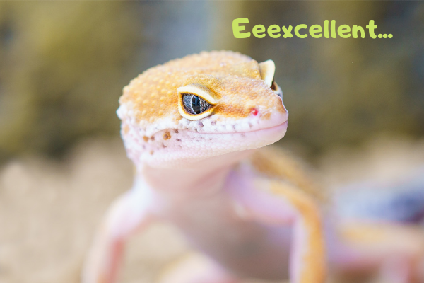 Image of leopard gecko saying: Excellent!