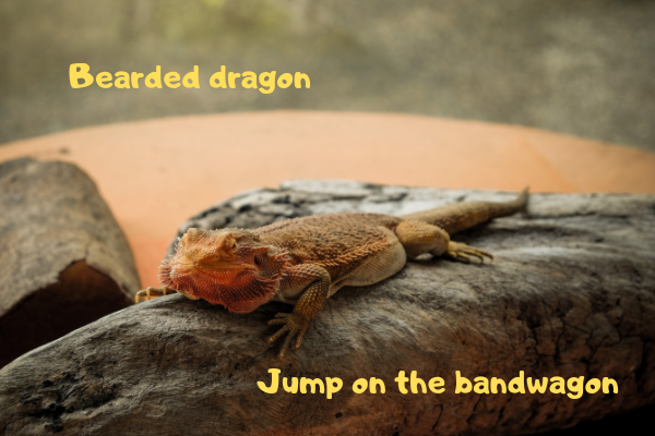 Image of a bearded dragon telling everyone to jump on the bandwagon