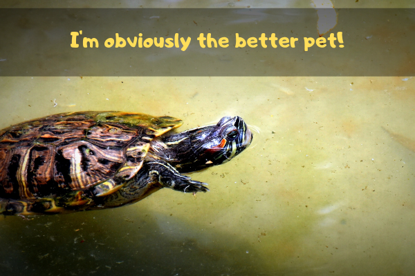 Turtle saying he's better in the match up of tortoise vs turtle