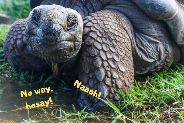 Tortoise saying he's better in the match up of turtle vs tortoise