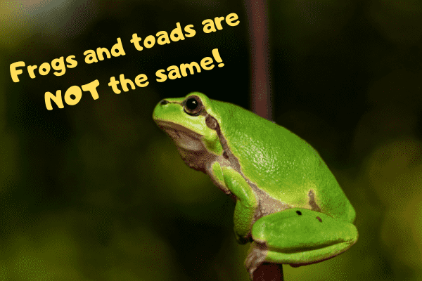 A toad saying that toads and frogs are not the same
