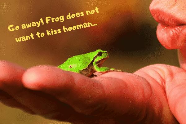 A pet frog telling their human that they don't want a kiss