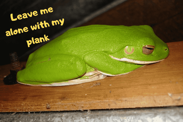 Image of a pet green tree frog