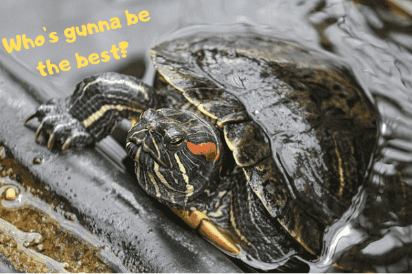 """Image of one of the best pet turtles asking: """"Who's going to be the best?"""""""