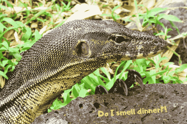 Image of a large pet water monitor